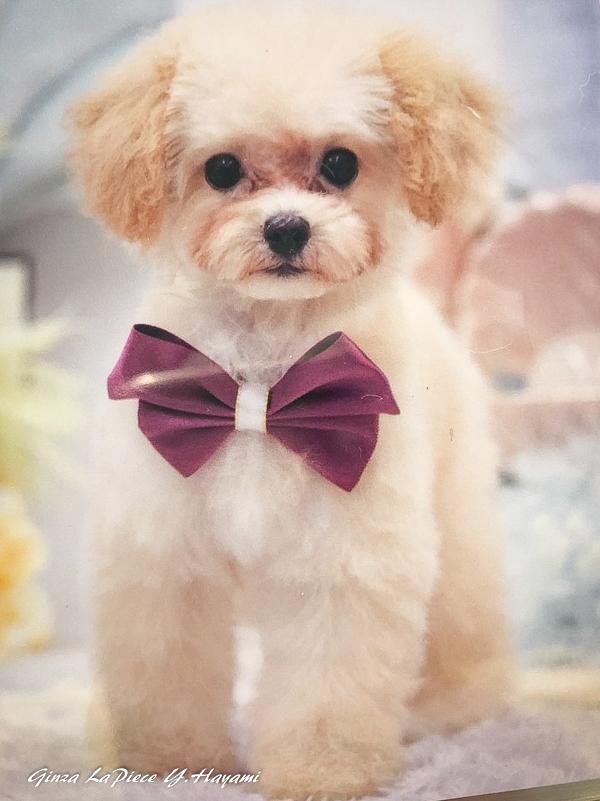 犬のいる風景 可愛すぎる子_b0133053_01000935.jpg
