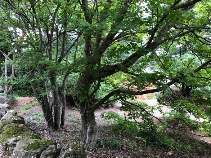 庭園、エコフェスタ、クニマス未来館、旧池田氏庭園_b0093660_14193090.jpg
