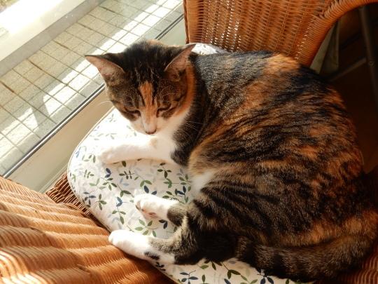 '19,9,28(土)「チェニスの黒猫」と散歩!_f0060461_08341477.jpg