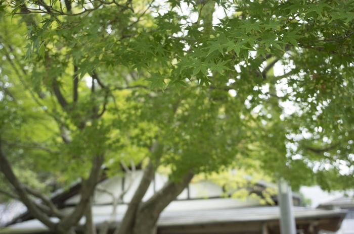 × いざ忍者の国伊賀上野へ参上 ×  (後編)_c0153896_09335186.jpg