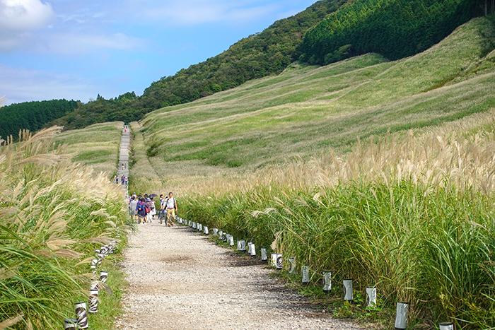 仙石原のすすき草原に行ってきました_b0145398_23290783.jpg
