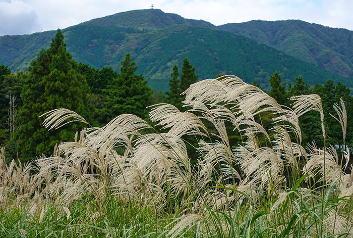 仙石原のすすき草原に行ってきました_b0145398_23294024.jpg