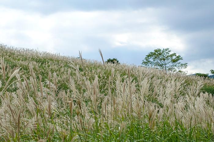仙石原のすすき草原に行ってきました_b0145398_23295634.jpg