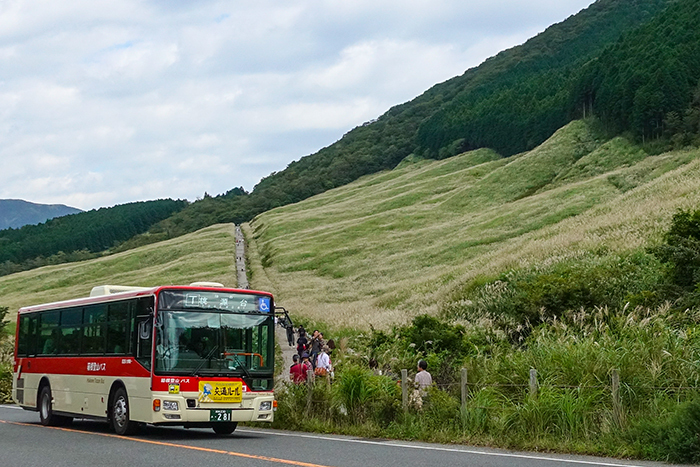 仙石原のすすき草原に行ってきました_b0145398_23301256.jpg