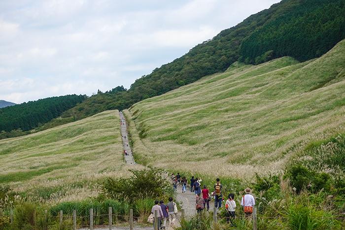 仙石原のすすき草原に行ってきました_b0145398_23302351.jpg