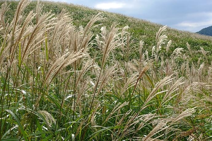 仙石原のすすき草原に行ってきました_b0145398_23340427.jpg