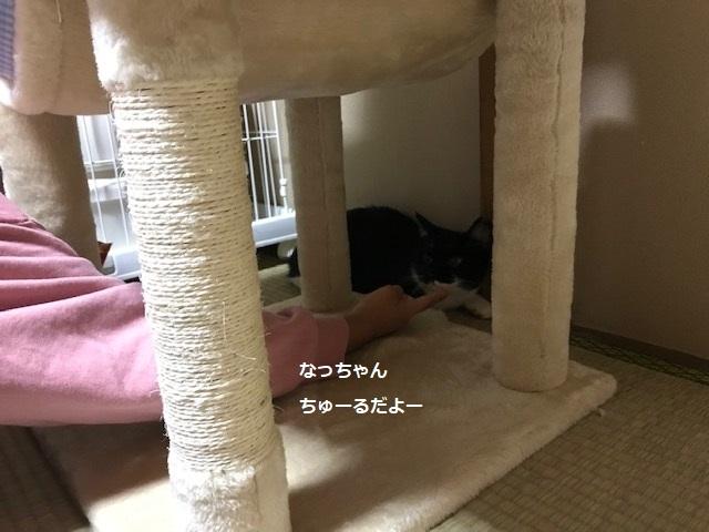 夏子ちゃん&空太くん 新生活スタート!_f0242002_07245662.jpg
