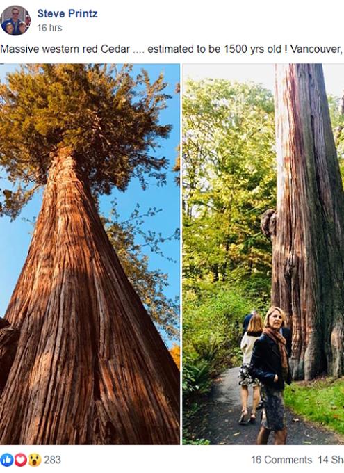 タイムズ・スクエアにBig Tree Seekers(大きな木を探す人々)の巨大看板_b0007805_23211453.jpg