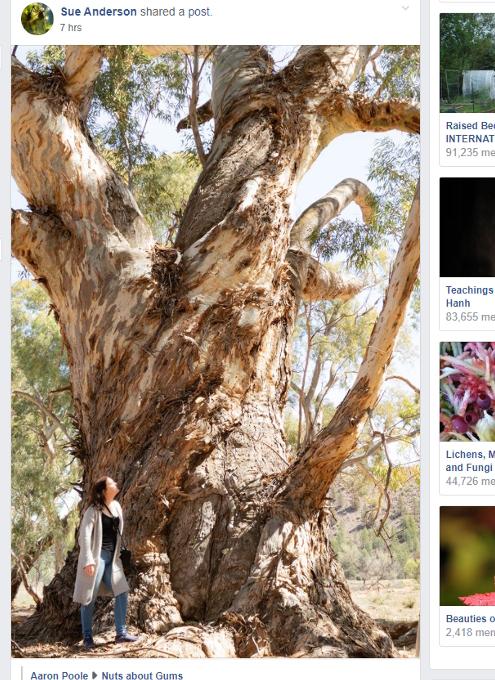 タイムズ・スクエアにBig Tree Seekers(大きな木を探す人々)の巨大看板_b0007805_23212431.jpg