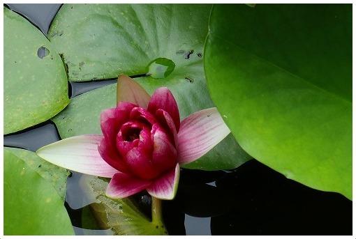 9月のお花たち_a0134114_12573595.jpg