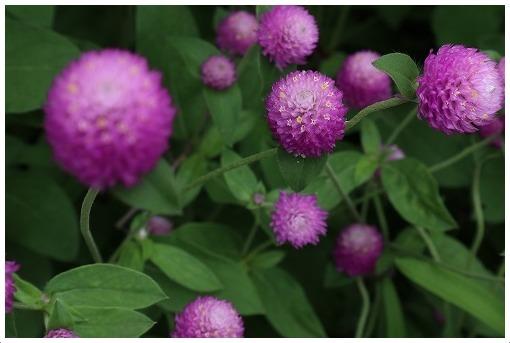 9月のお花たち_a0134114_12575820.jpg