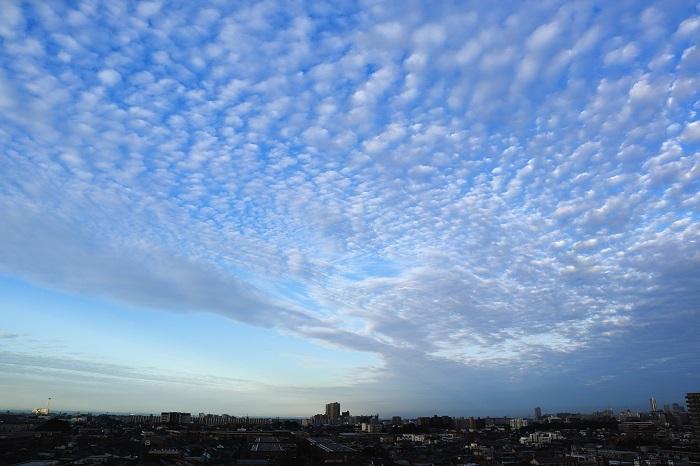 ひつじ雲(高積雲) : 日々の風景
