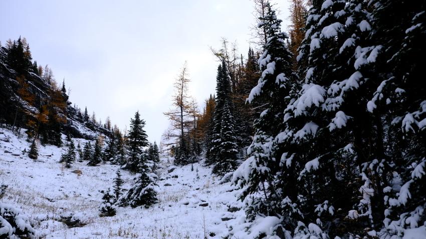 雪景色も素晴らしいレイクオハラ、神秘的な風景を求めて!!_d0112928_14132084.jpg