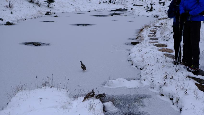 雪景色も素晴らしいレイクオハラ、神秘的な風景を求めて!!_d0112928_14152303.jpg