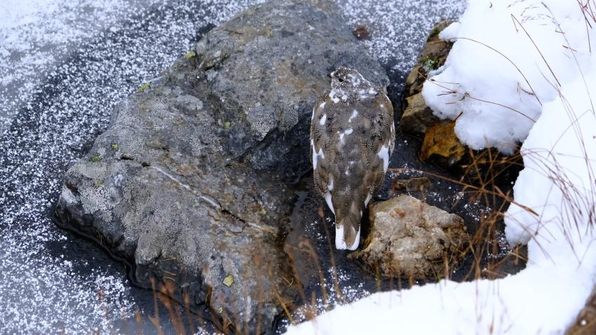 雪景色も素晴らしいレイクオハラ、神秘的な風景を求めて!!_d0112928_14153792.jpg