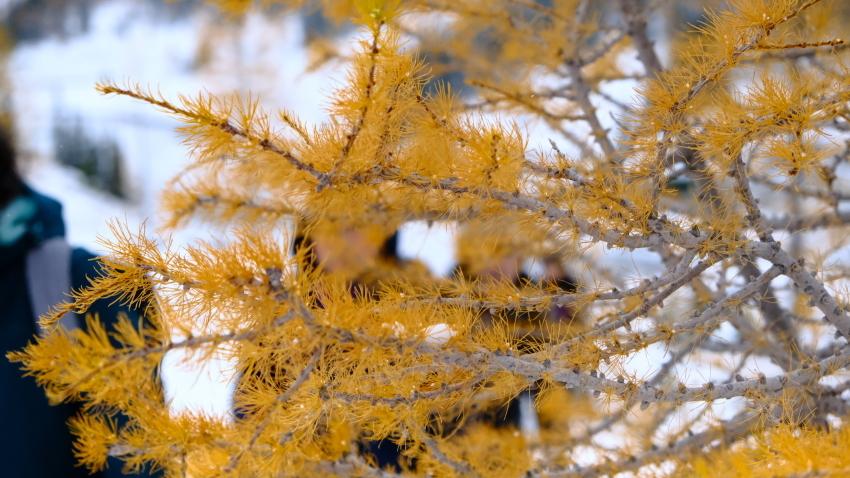 雪景色も素晴らしいレイクオハラ、神秘的な風景を求めて!!_d0112928_14185722.jpg