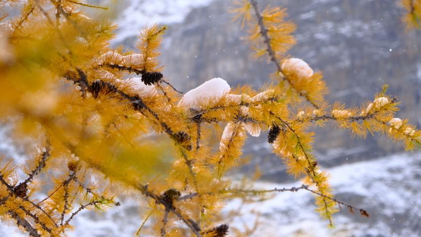 雪景色も素晴らしいレイクオハラ、神秘的な風景を求めて!!_d0112928_14230861.jpg