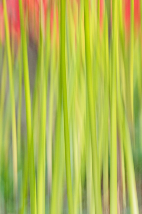 箕輪の赤蕎麦と嶺岳寺の彼岸花_c0077531_15425702.jpg