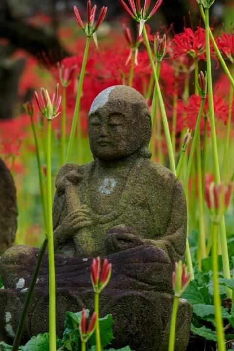 箕輪の赤蕎麦と嶺岳寺の彼岸花_c0077531_15430331.jpg