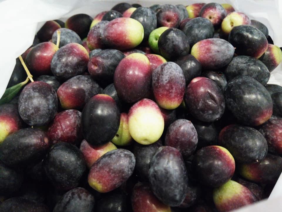 食用オリーブを保存しよう!_b0305039_00185164.jpg