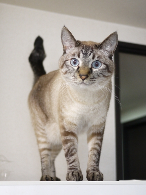猫のお留守番 らいちくん編。_a0143140_21543440.jpg