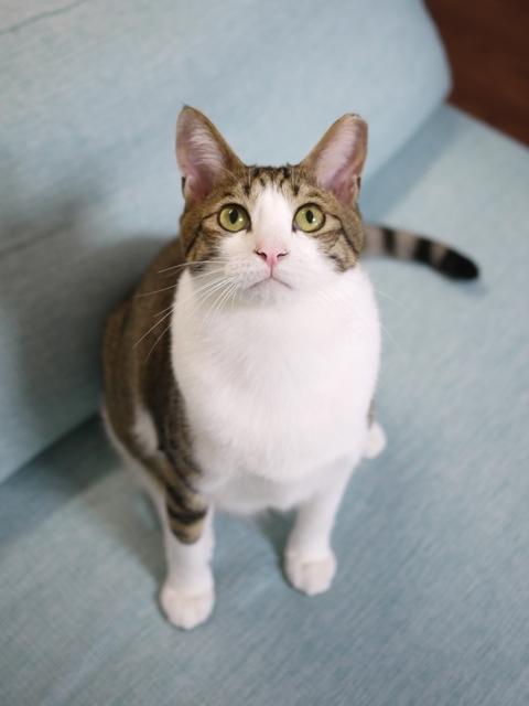 猫のお留守番 あづきくん編。_a0143140_21591836.jpg