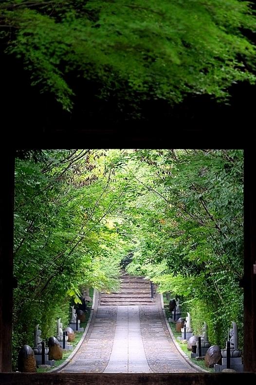 山門と参道_b0314043_09022324.jpg