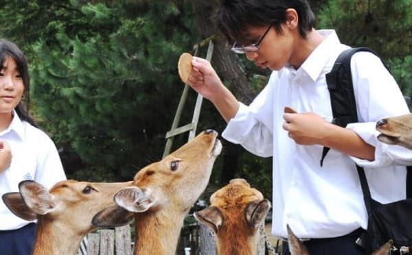 鹿せんべい50円値上げへ 奈良、消費増税で28年ぶり_e0404351_12290482.jpg