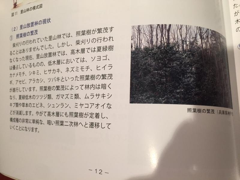 里山放置林→照葉二次林への遷移。_c0074553_22530757.jpg