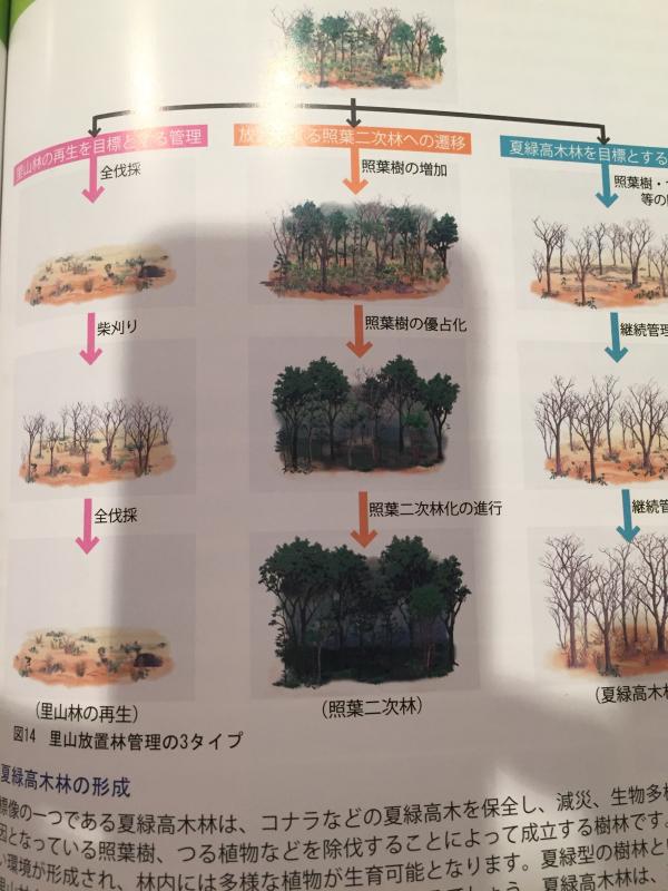 里山放置林→照葉二次林への遷移。_c0074553_22551950.jpg