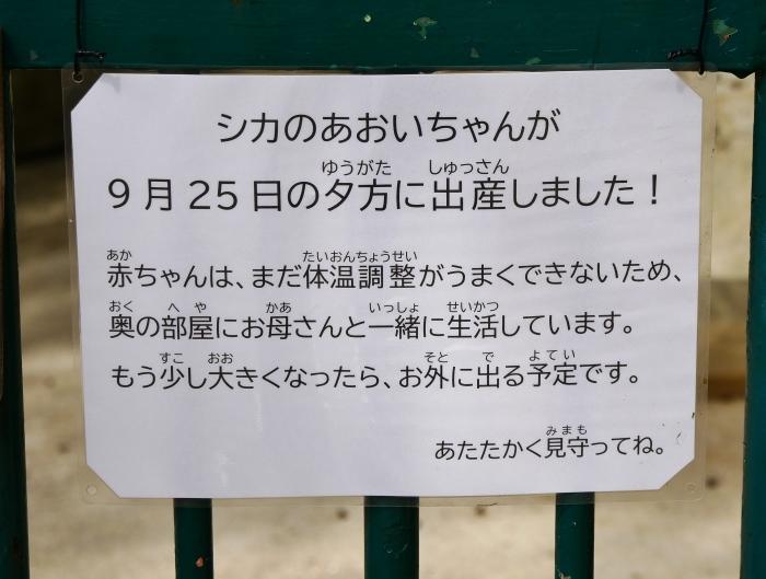 お城の動物園 鹿の赤ちゃん生まれる  2019-09-30 00:00  _b0093754_17114783.jpg