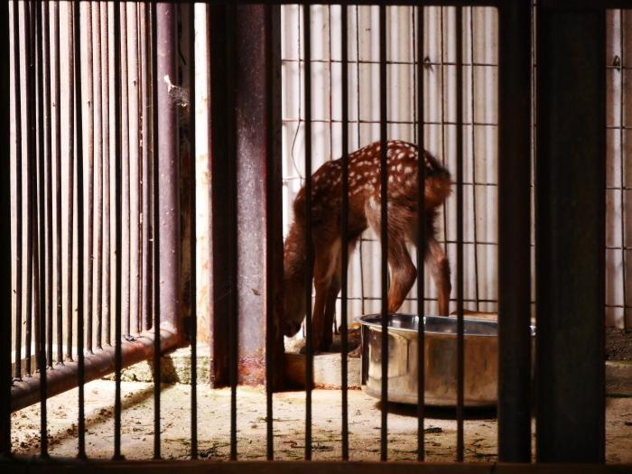お城の動物園 鹿の赤ちゃん生まれる  2019-09-30 00:00  _b0093754_17120757.jpg