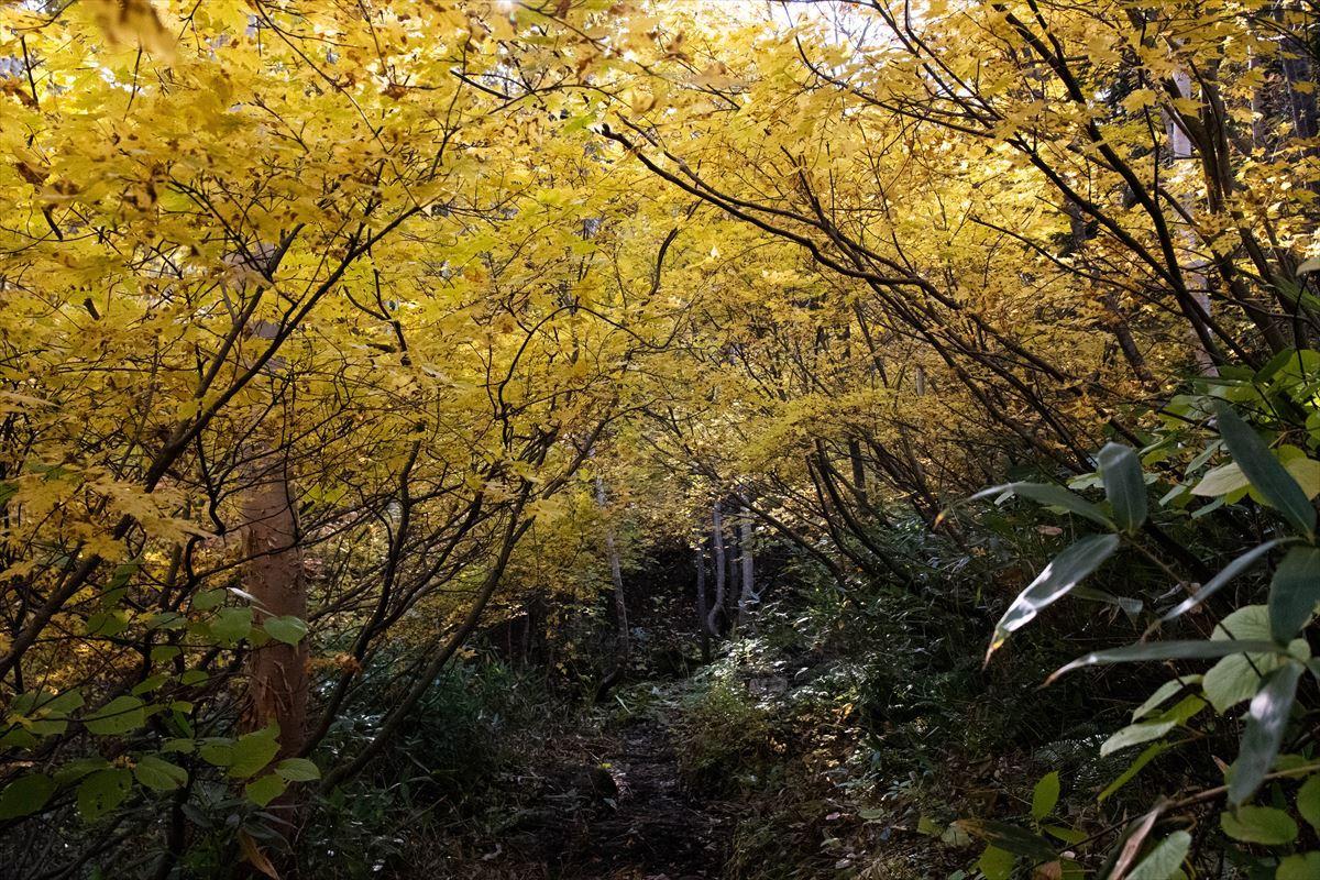 紅葉を愛でる~愛山渓温泉から当麻乗越まで~_b0281366_10511258.jpg