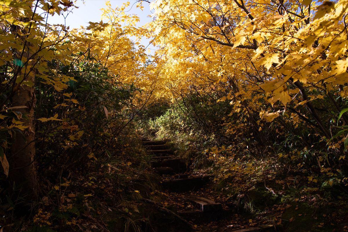 紅葉を愛でる~愛山渓温泉から当麻乗越まで~_b0281366_10511818.jpg