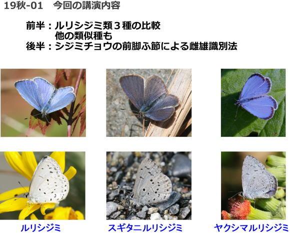 来週は鱗翅学会・秋のつどい_a0146869_19515743.jpg