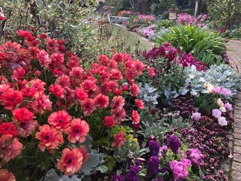 アナーセン秋色Gardenフェア期間延長・・・10月20日まで延長します_b0137969_16542210.jpeg