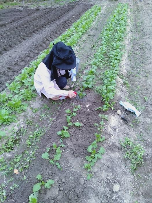 野菜の間引き_a0199979_19430685.jpg