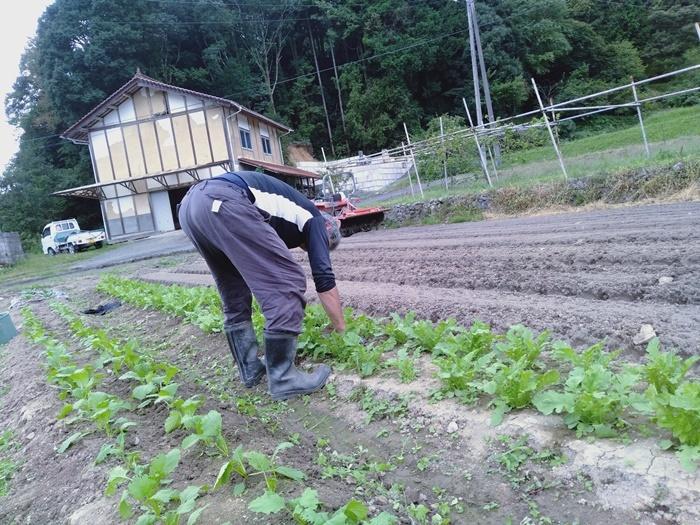 野菜の間引き_a0199979_19431613.jpg