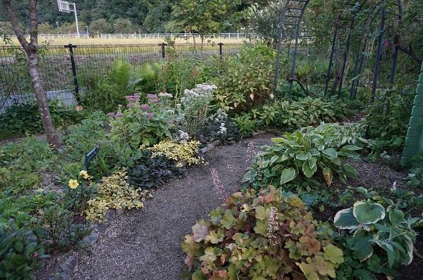 庭は年々変化_e0365880_23024294.jpg