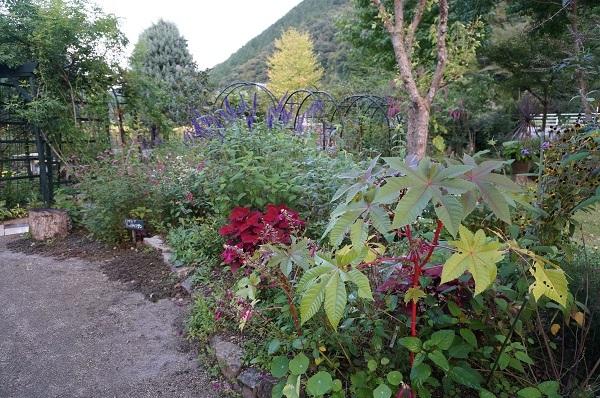 庭は年々変化_e0365880_23025149.jpg