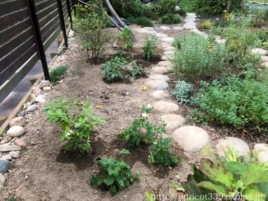 秋の庭しごと 宿根草の植えかえ_c0293787_20570913.jpg