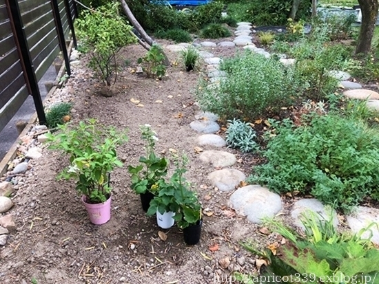 秋の庭しごと 宿根草の植えかえ_c0293787_20571771.jpg