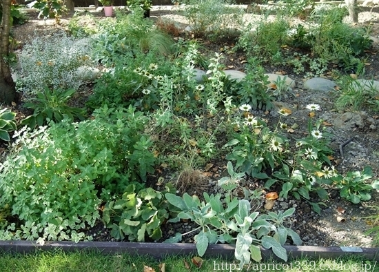 秋の庭しごと 宿根草の植えかえ_c0293787_20574604.jpg