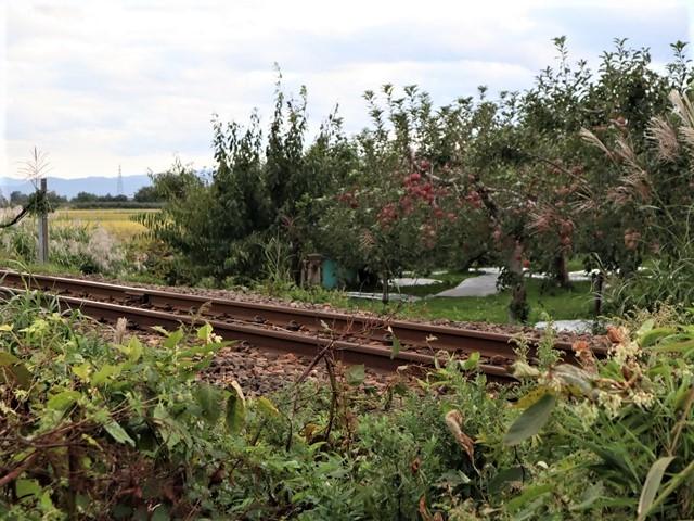 藤田八束の鉄道写真@東北のリゾート列車「しらかみ」五能線を走る、リンゴ畑と岩木山、そして「しらかみ」・・・国会論争に期待_d0181492_16073218.jpg