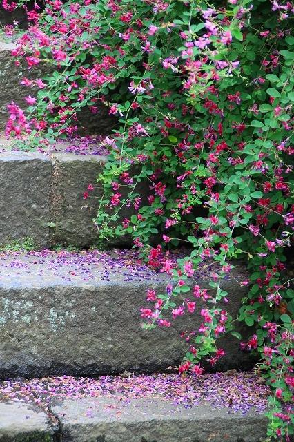 鎌倉の秋の花 海蔵寺の萩_f0374092_21233407.jpg