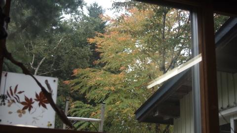 窓の外は秋色_b0343293_21500411.jpg