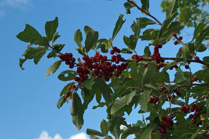 木の実_d0162994_08050556.jpg