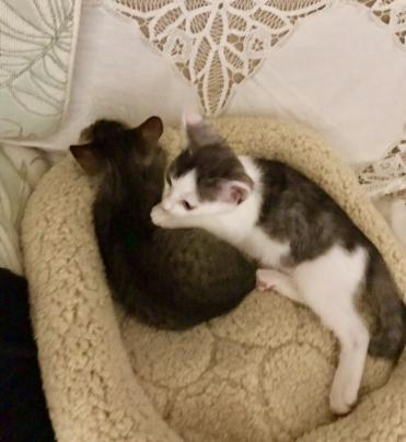 茨城県常陸太田市からの子猫の兄弟です。_a0134296_14114003.jpg