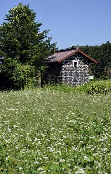 カラミ煉瓦の蔵と蕎麦の花_f0173596_11341211.jpg