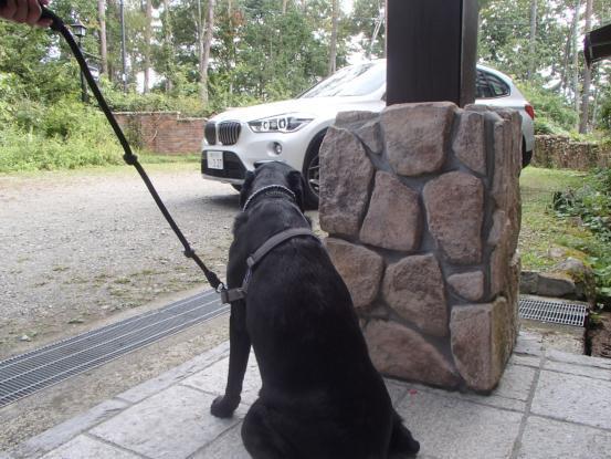 いつもハッピー喜び犬_f0064906_12231492.jpg